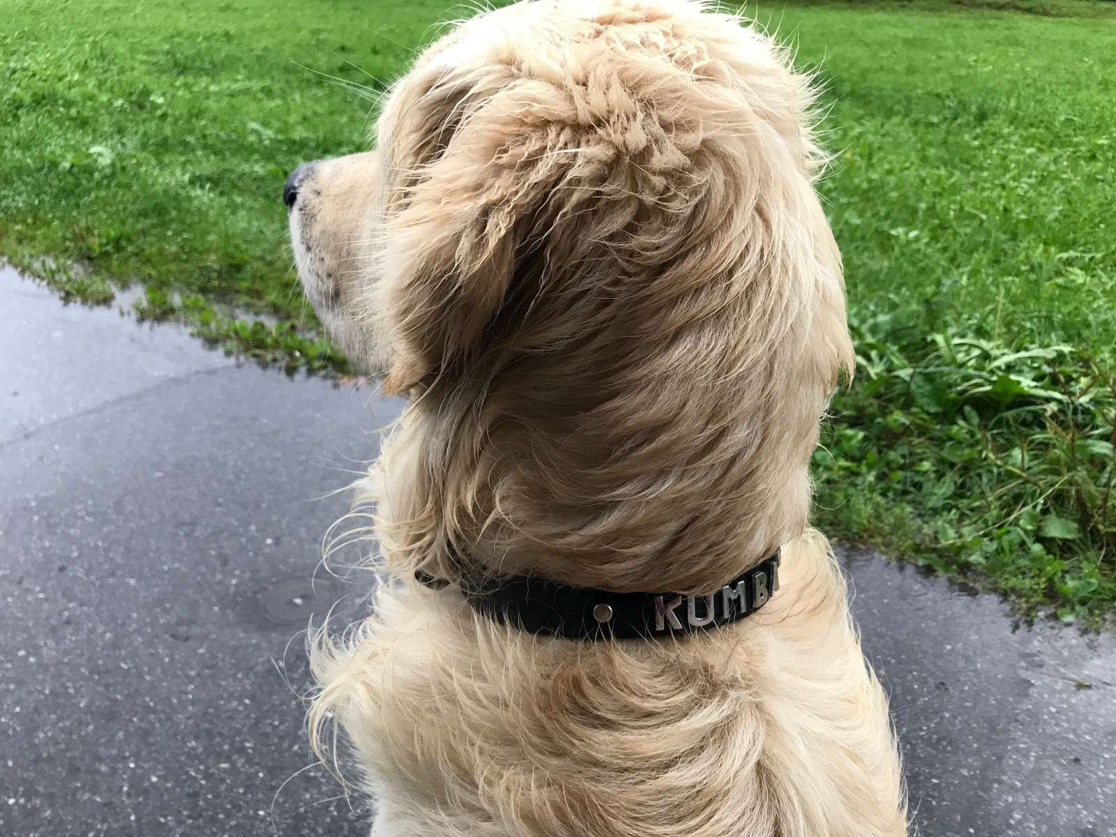 hundehalsband1